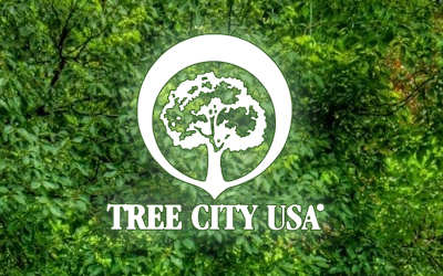 Suwanee Named Tree City USA